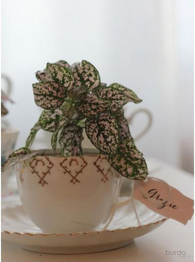 Giardini in tazza da tè